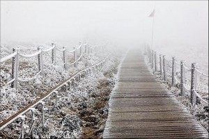 lopen in de mist